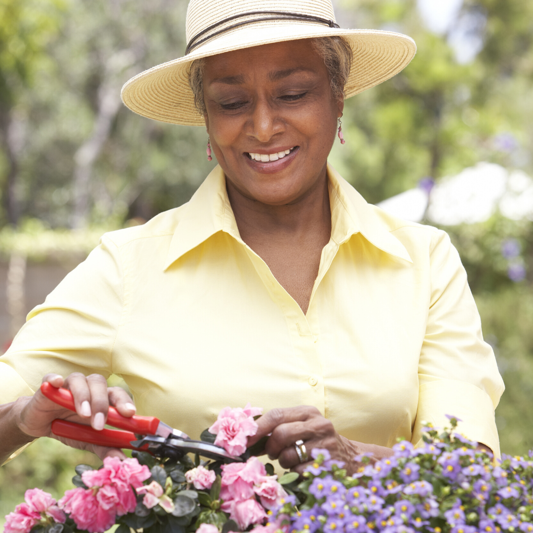 African American senior woman with hat pruning flowers
